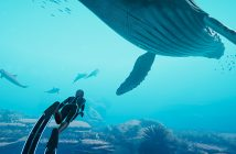A screenshot from Beyond Blue, showing a diver swimming with a blue whale